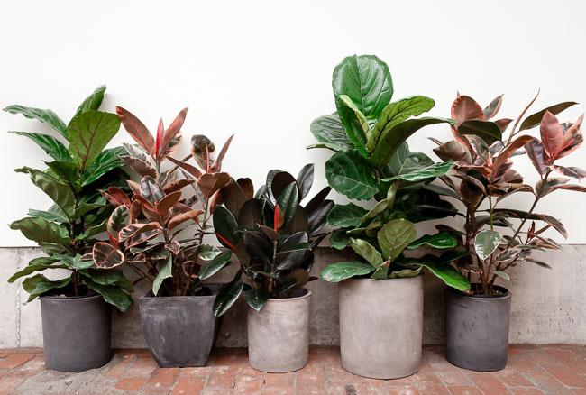 Cinco plantas fuertes de interior